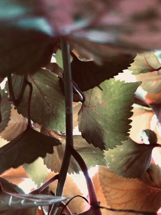 Plein tir de cadre des feuilles photos stock