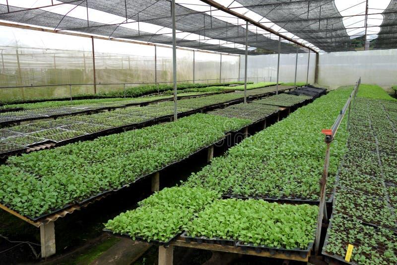 Pleine Chambre commerciale d'ombre d'agriculture images libres de droits