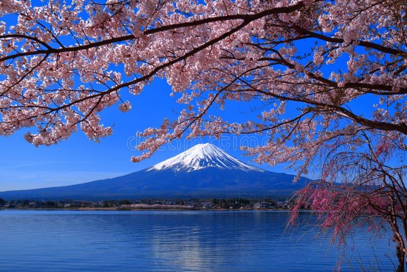 Pleine floraison de fleurs de cerisier et Mt Lac Kawaguchi Japon fuji photos libres de droits