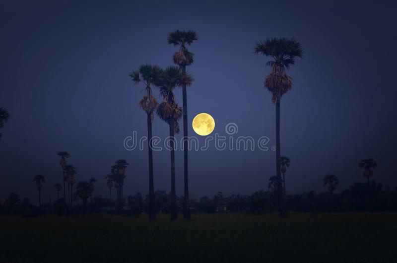 Pleine lune au-dessus de champ d'herbe et de vieux palmier à sucre image libre de droits
