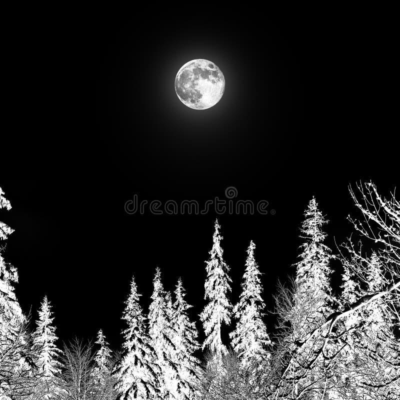 Pleine lune au-dessus de la for?t image libre de droits