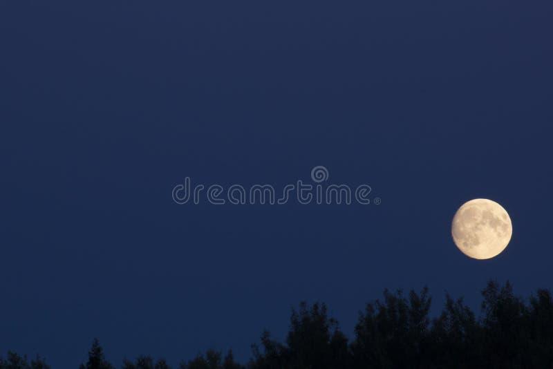 Pleine lune au-dessus des arbres photographie stock