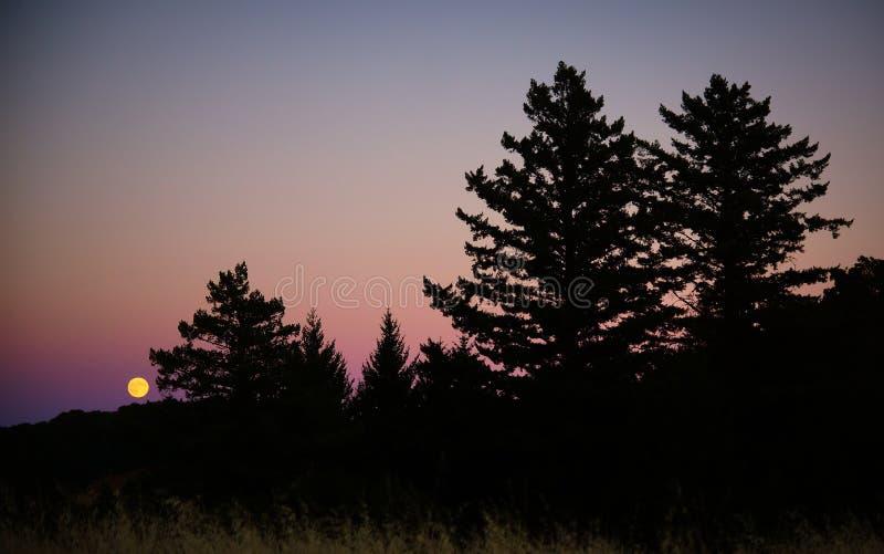 Pleine lune dans la forêt image stock