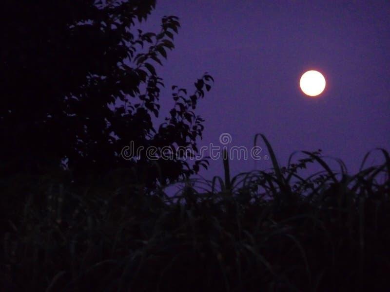 Pleine lune dans le jardin images stock