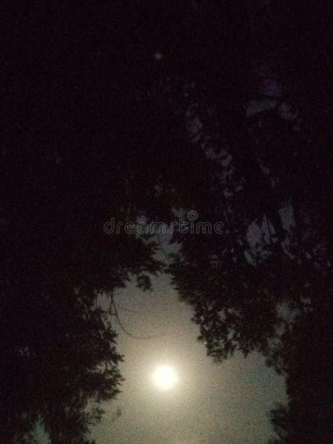 Pleine lune dans les arbres photos stock
