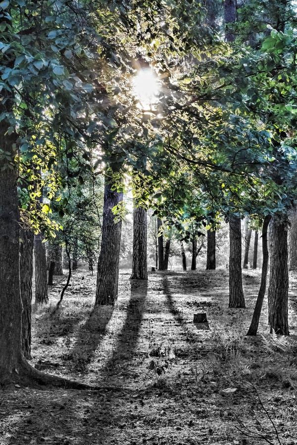 Pleine lune de forêt mystique photo libre de droits