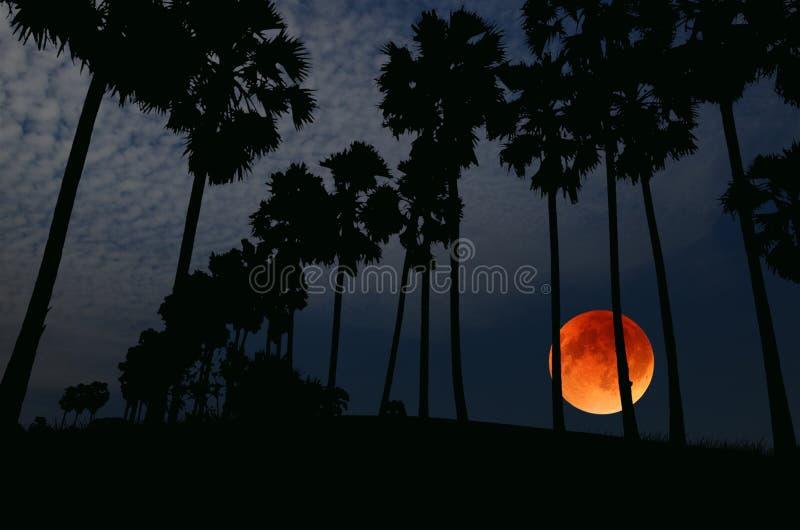 Pleine lune le soir dans la forêt de palmier à sucre photos stock