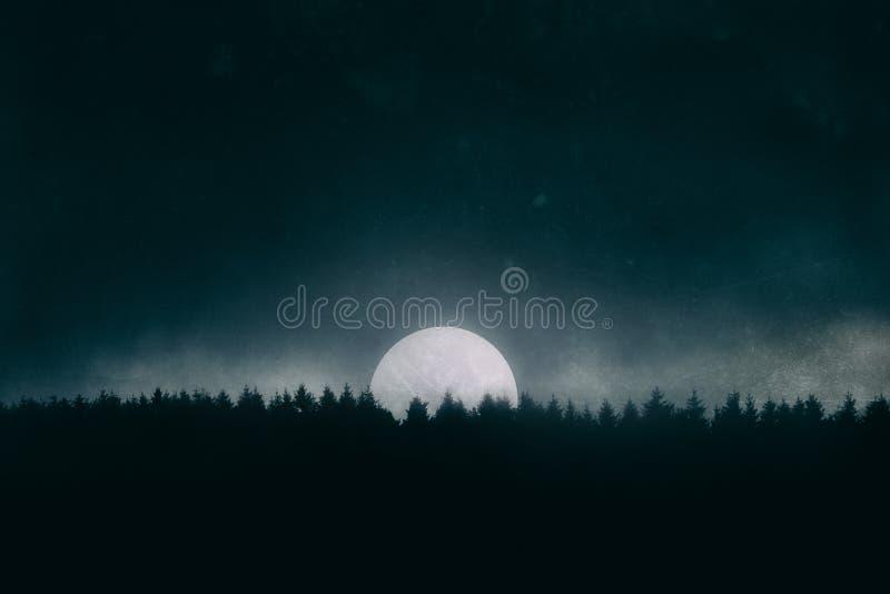 Pleine lune sur la forêt la nuit image stock