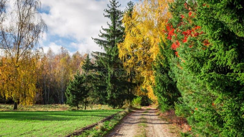 Pleine OD couleur du chemin dans la forêt photos libres de droits