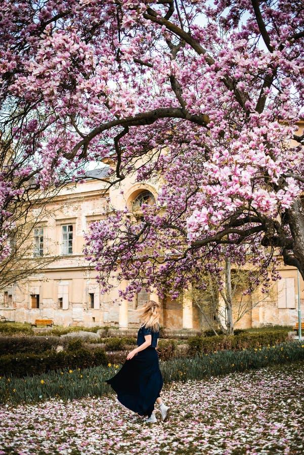 Plenerowa fotografia młoda kobieta taniec pod magnoliowym drzewem w pełnym kwiacie jest ubranym zmrok - błękitów ubrania przed ka fotografia royalty free