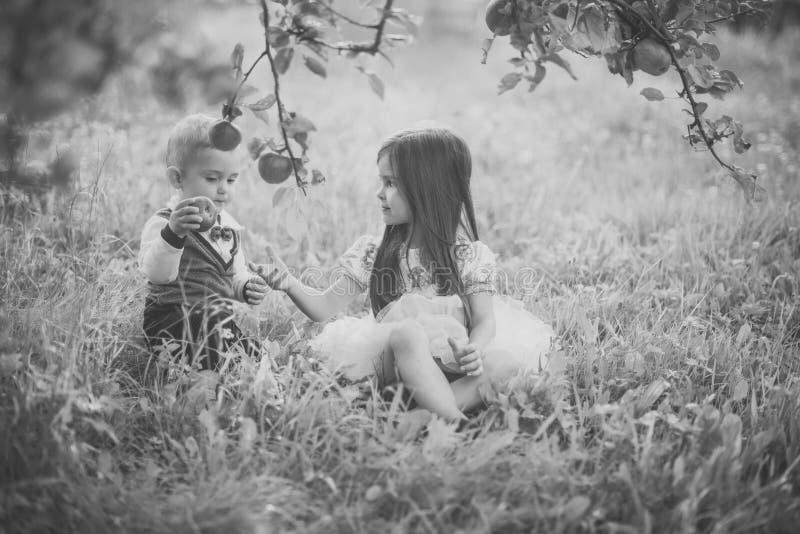 Plenerowa zabawa dla dzieci Dzieci podnosi jabłka na gospodarstwie rolnym w jesieni zdjęcia stock