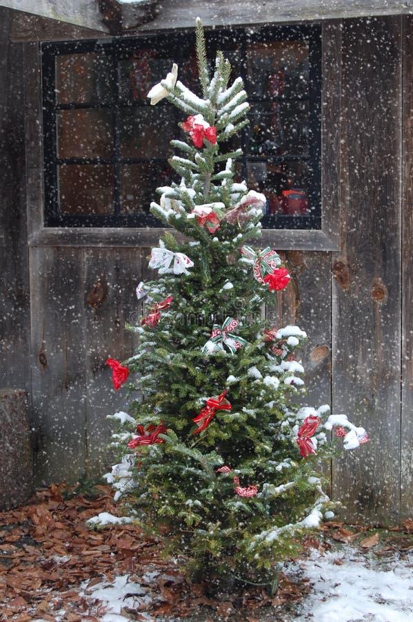 Plenerowy choinki Snowing obrazy royalty free