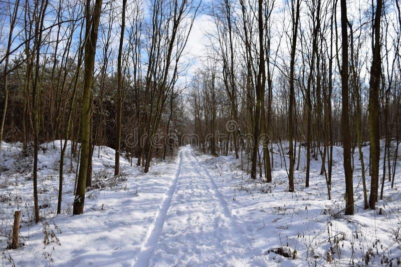 Plenerowy drewno natury krajobraz przy zimnym dniem Zimny dzień w śnieżnej zimy zimy lasowej Pięknej panoramie Śnieg zakrywać sos fotografia royalty free