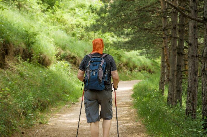 plenerowy Mężczyzna z kijami dla Północnego odprowadzenia i plecaka angażował w trekking na ścieżce w sosnowym parku lub lesie Zd zdjęcie royalty free
