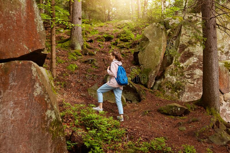 Plenerowy strzał wędrować energicznej kobiety, iść na górze lasowego wzgórza, mieć wakacje w lato lesie, wydający czas, być obrazy stock