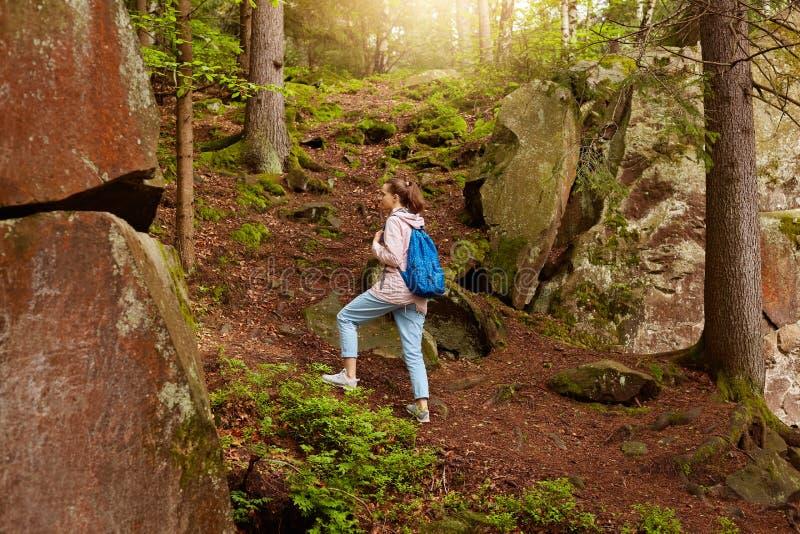 Plenerowy strzał wędrować energicznej kobiety, iść na górze lasowego wzgórza, mieć wakacje w lato lesie, wydający czas, być obraz stock