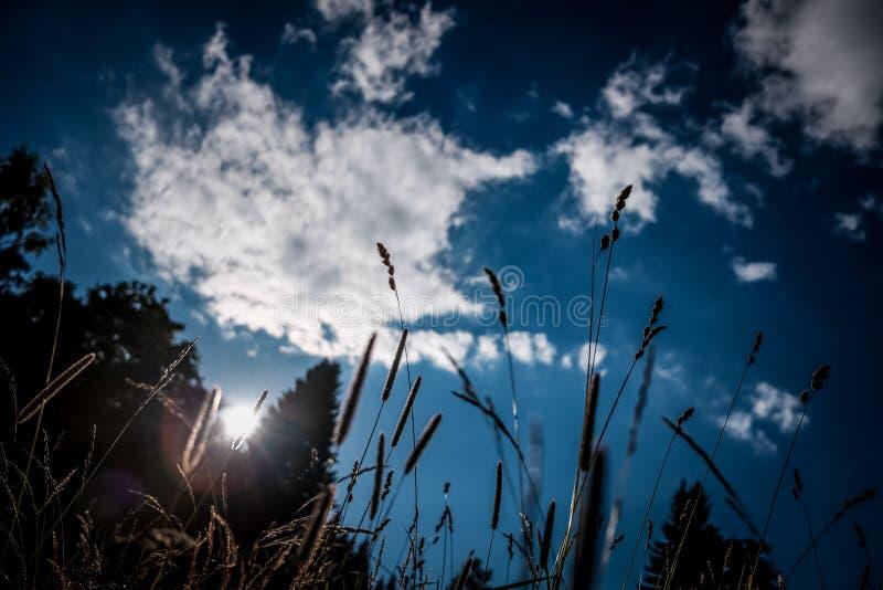 Plenerowy trawy słońce z niebem obrazy royalty free