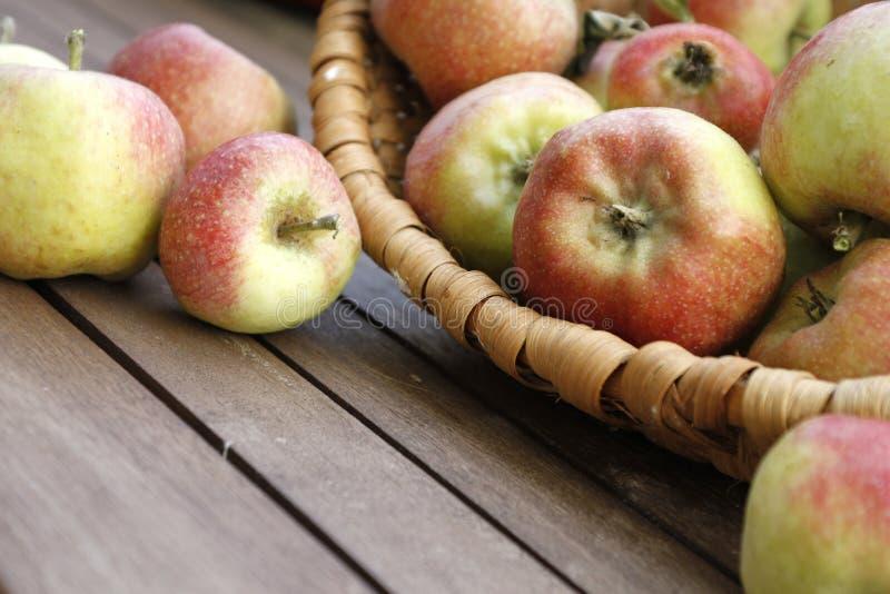 Plentiful Harvest Stock Photo
