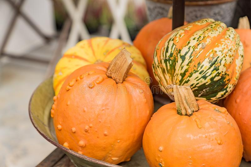 Plenty of decorative pumpkins of different colors green, yellow and orange in metall basket. Harvest festival or farmers market.  stock photos