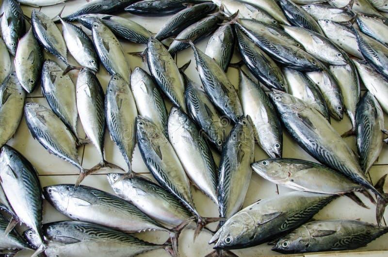 Plenty of fish on the floor at fish market area stock for Plenty of fish cost