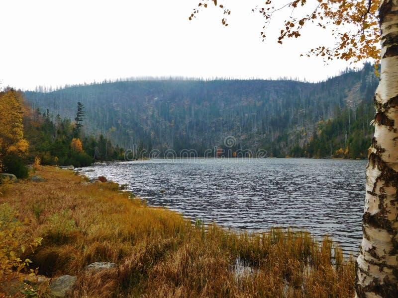 Plesne lake, acid lake in Åumava mountains, bohemia, Czech Republic, acid Rain royalty free stock photo