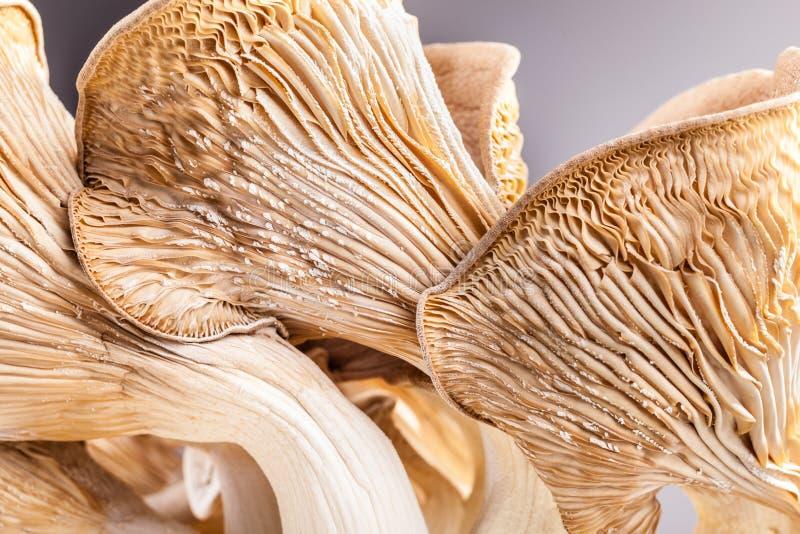 Pleurotus eryngii hymenophore lizenzfreies stockfoto