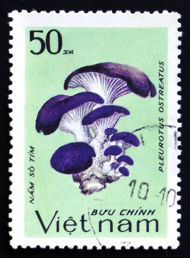 Pleurotus ostreatus, series, circa 1983. MOSCOW, RUSSIA - FEBRUARY 12, 2017: A stamp printed in Vietnam shows Pleurotus ostreatus, series, circa 1983 stock images