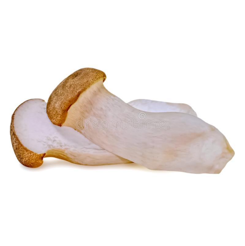 PleurotusEryngii konung Oyster Mushroom som isoleras på vit fotografering för bildbyråer
