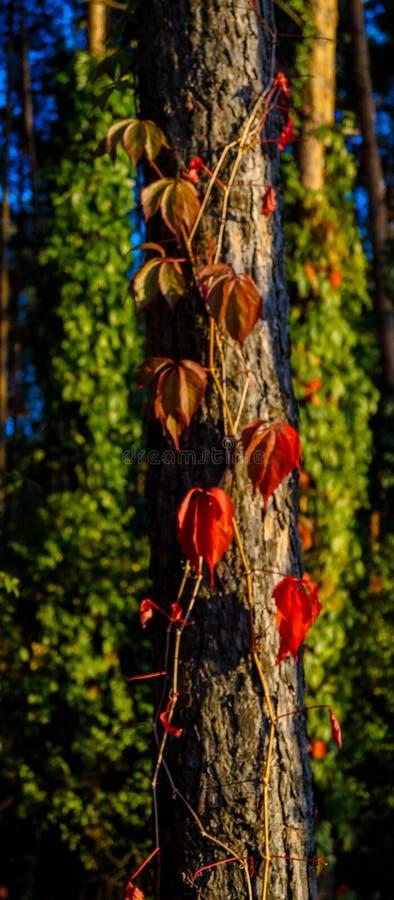 Plexo del árbol y de la planta imagenes de archivo