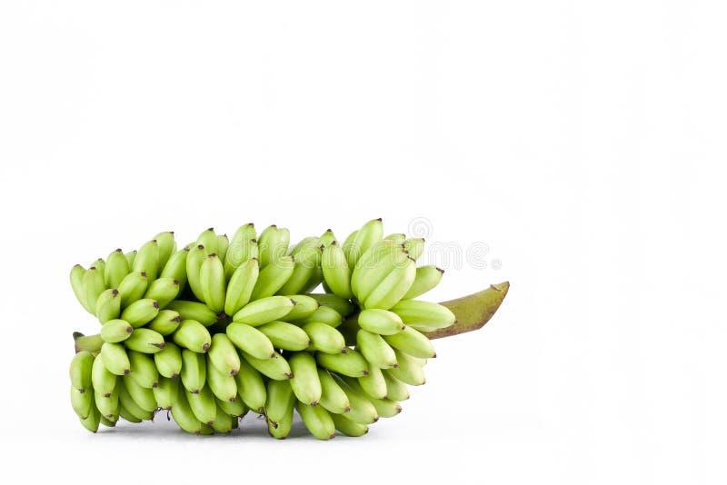 plik świeży surowy dama palca banan na białego tła Pisang Mas zdrowym Bananowym owocowym jedzeniu odizolowywającym royalty ilustracja