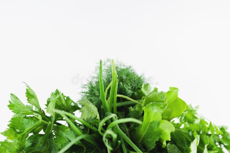 Plik zielony świeży surowy koper, pietruszka, cebula, seler i kobylak, zdjęcie royalty free