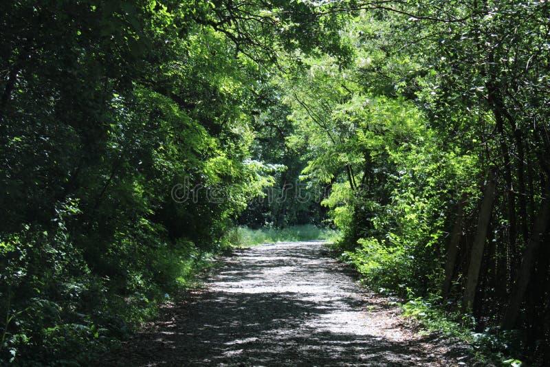 Plimbare στο padure στοκ φωτογραφία με δικαίωμα ελεύθερης χρήσης