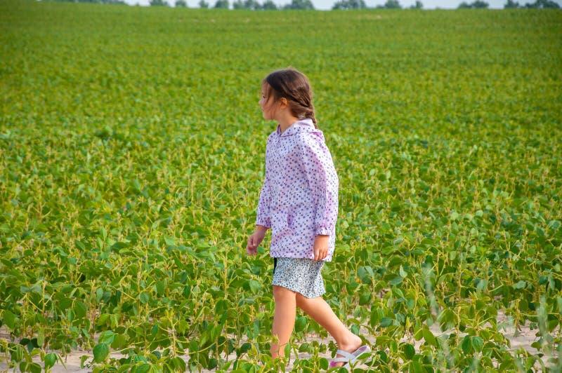 PLittle gullig flicka som stöter ihop med sojabönafältet, sommar arkivfoto