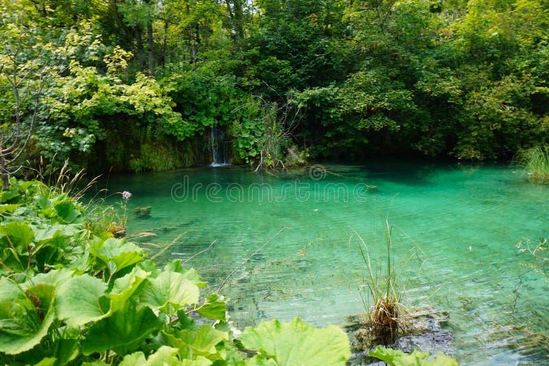 Plitvice湖全国公园克罗地亚 在一个晴朗的夏天下午的一个美丽的池塘 库存照片