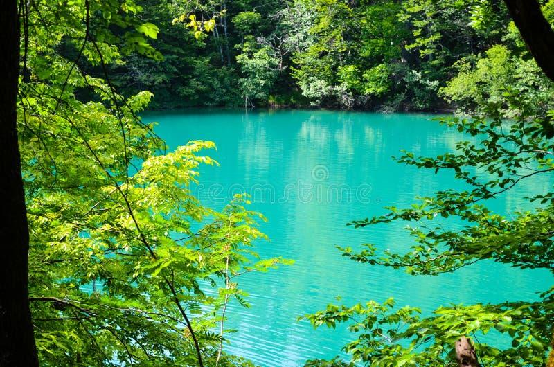 plitvice озер Хорватии стоковое фото rf