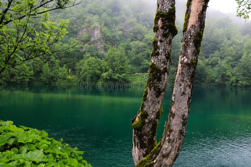 Amazing Plitvice Lakes National Park, Croatia royalty free stock photography