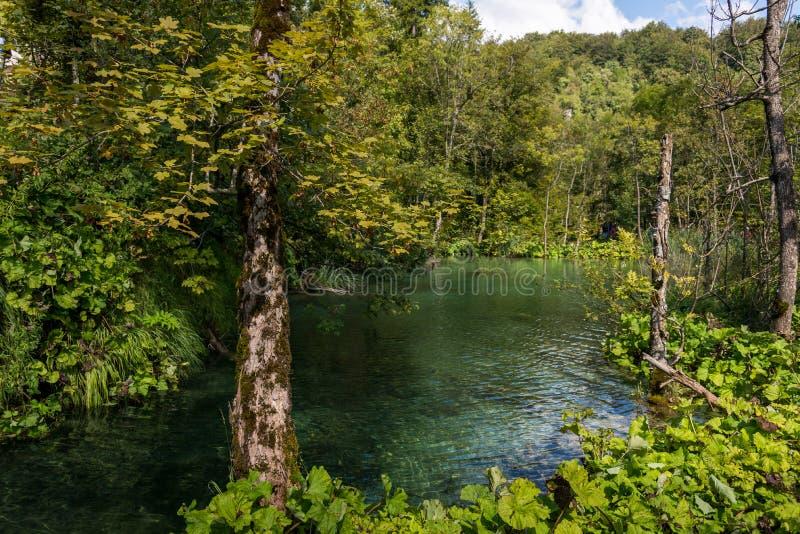 Plitvice See-Nationalpark in Kroatien stockbild