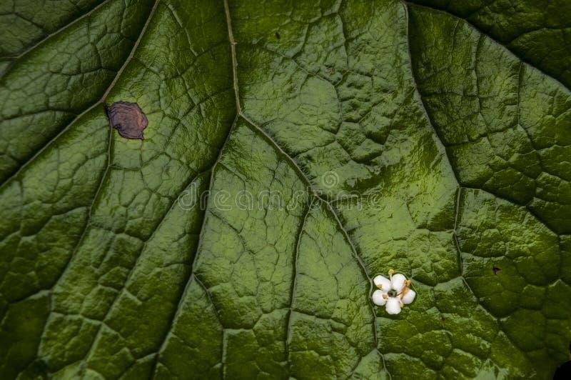 Plitvice sjönationalpark, blad, skog, gräsplan, miljö, blomma, naturreserv, Kroatien, Europa fotografering för bildbyråer