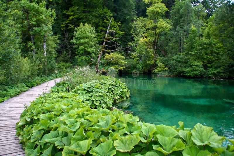 Plitvicemeren - het water van Kroatië van de Watervalaard plitvize meer royalty-vrije stock afbeeldingen