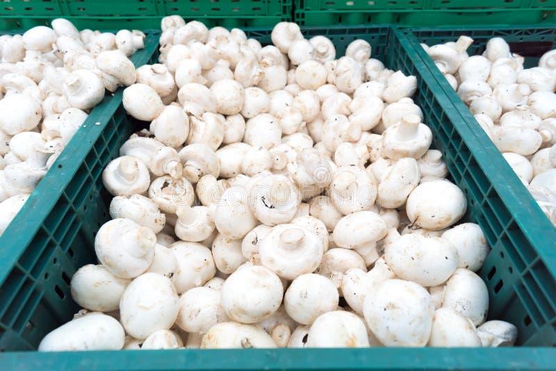 Plocka svamp champignons i askar royaltyfria foton