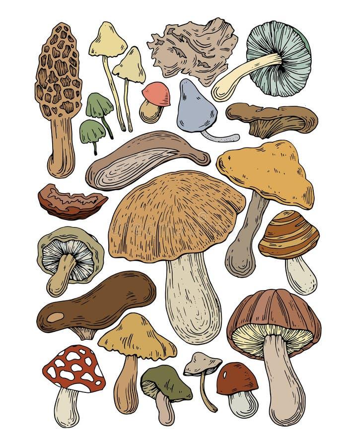 Plocka svamp den naturliga svampen för mat stock illustrationer