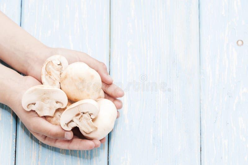 plocka svamp organiskt white för studio för makro för hälsa för mat för bakgrundshavreflakes Nya champinjoner i händerna royaltyfri fotografi