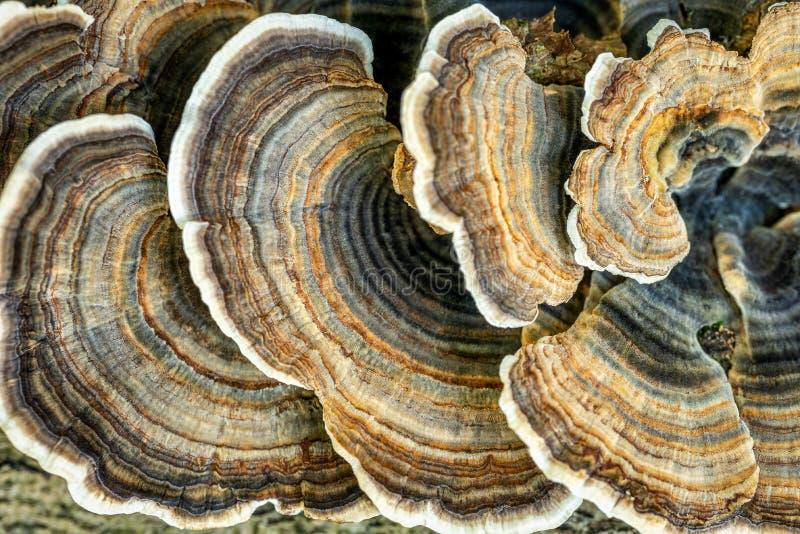plocka svamp treestammen royaltyfria foton