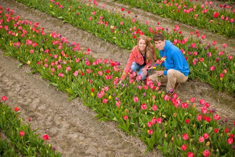 plocka turisttulpan för holländare royaltyfria foton