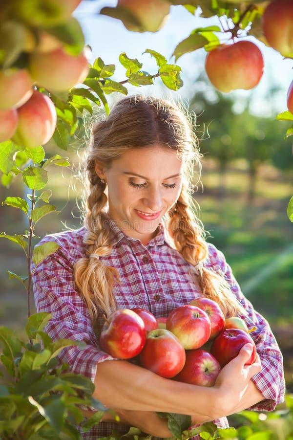Plockningäpplen för ung kvinna från äppleträd på en älskvärd solig summa arkivfoton