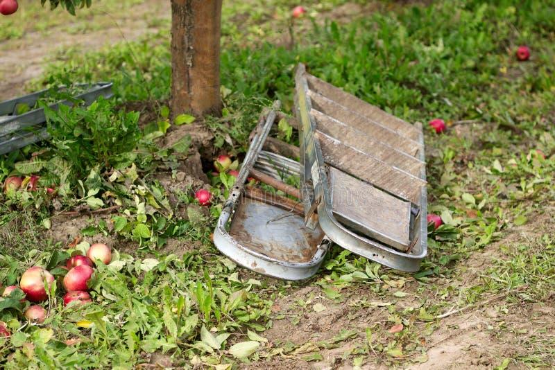 Plockningäpplen i en fruktträdgård De stupade äpplena och trappan Lantlig stil, selektiv fokus royaltyfri foto