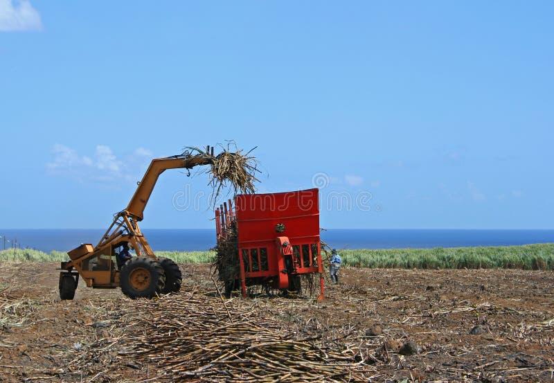 Download Plockning fotografering för bildbyråer. Bild av mauritius - 520769