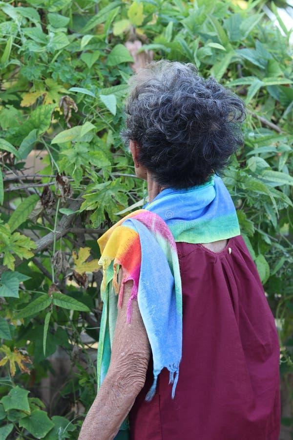 Plockninggrönsaker för äldre kvinna i henne hus arkivbild