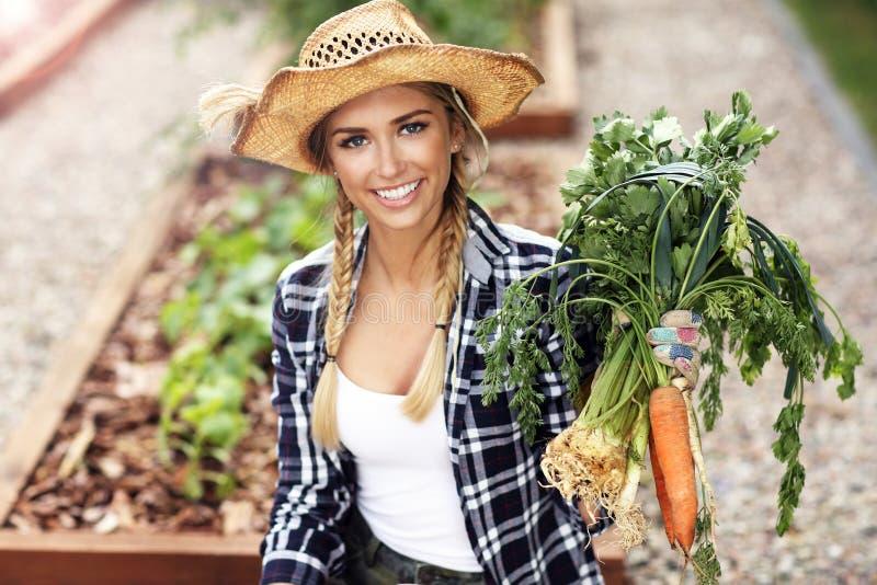 Plockninggrönsaker för vuxen kvinna från trädgård royaltyfria bilder