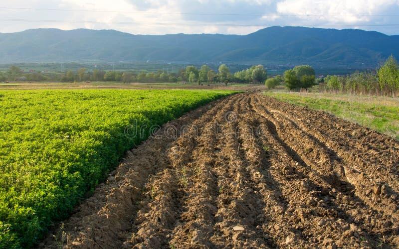 Plogad jord som är klar för att plantera grönsaker royaltyfria bilder